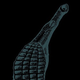 Aspidogaster